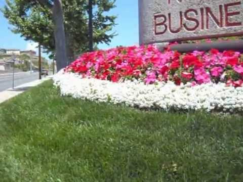 Color Done Right Red and Pink Mixed Petunias and White Alyssum
