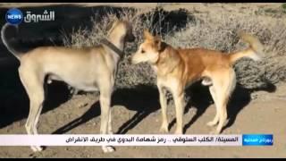 getlinkyoutube.com-المسيلة: الكلب السلوقي.. رمز شهامة البدوي في طريق الانقراض