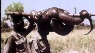 getlinkyoutube.com-Ushuaia - Chasse aux serpents