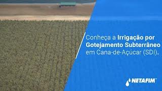 Sistema de irrigação por gotejamento subterrâneo - Cana de Açúcar