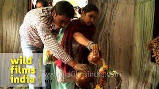 Snake worship: Hindu devotees pour milk over serpent god's form
