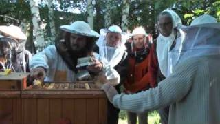 Praktická obsluha včelstev pro začátečníky