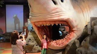 Explore the Museum of Discovery and Science in Fort Lauderdale
