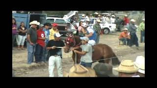 getlinkyoutube.com-EL FELINO VS. EL GATO