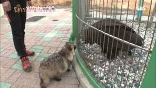 getlinkyoutube.com-SBS [동물농장] - 야생동물 구조 7일간의 기록