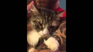 getlinkyoutube.com-Cat bot fly