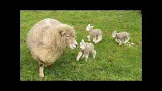 getlinkyoutube.com-adrian - urca oile la munte(live)