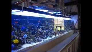 getlinkyoutube.com-1200 gallon reef aquarium with 3 Solatubes