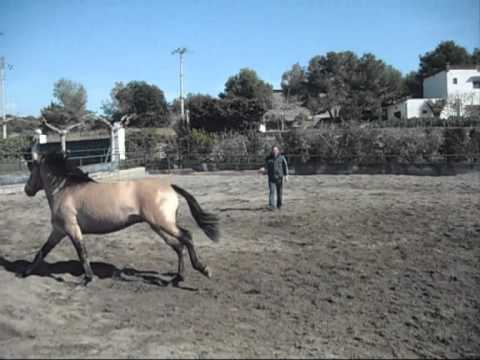 CABALLO P.R.E BAYO VIDEO DE KILATE XXX_0001.wmv