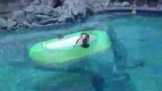getlinkyoutube.com-Pool Hounds