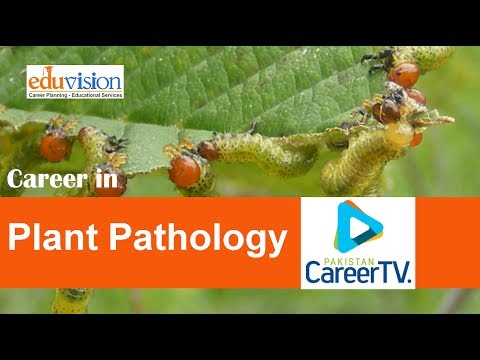 Career in Plant Pathology