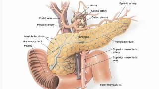 getlinkyoutube.com-PANCREAS , DIET ,DIABETES , لبلبہ ، ڈائٹ ، ذیابیطس, अग्न्याशय , आहार , मधुमेह  ICSP URDU HINDI 1