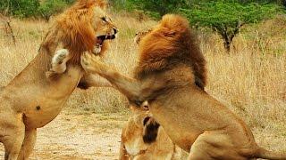 getlinkyoutube.com-Lion Gangland - 720p NGW