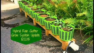 getlinkyoutube.com-SSG Hybrid Rain Gutter Grow System Update 8/22/2015