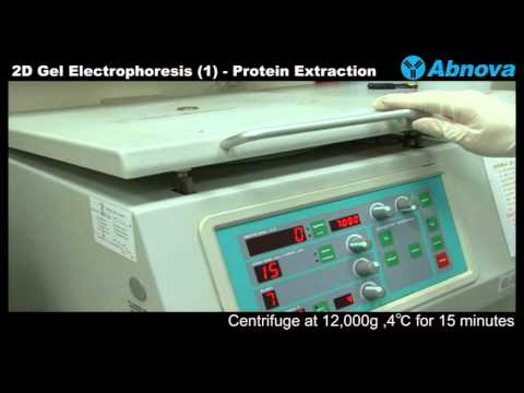 2D Gel Electrophoresis (1) Protein Extraction