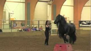 getlinkyoutube.com-FRIESIAN STALLION UNBELIEVABLE, Frederik the Great
