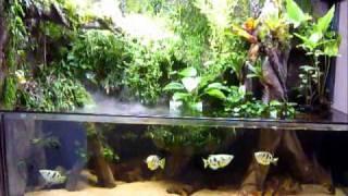 getlinkyoutube.com-300g paludarium