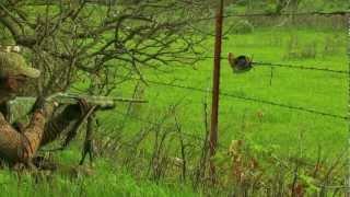 getlinkyoutube.com-Hunting Eastern Turkeys in Oklahoma