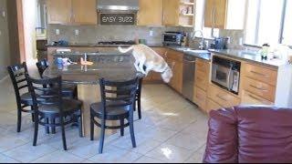 Que fait mon chien quand nous ne sommes pas à la maison!
