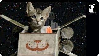 getlinkyoutube.com-Star Wars Parody - Paw Warz - Trench Run Scene - Petody ®