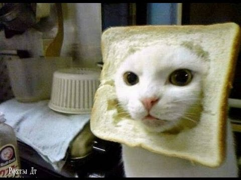 Hank Green, professional cat GIF critic