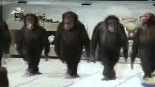 getlinkyoutube.com-GOYANG DUMANG (versi monyet)