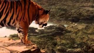 getlinkyoutube.com-Księga Dżungli ParT...1z8