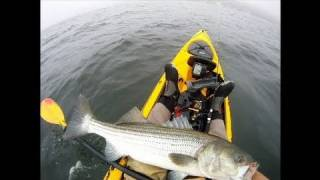 getlinkyoutube.com-Striped Bass Fishing with Tube and Worm using Gulp