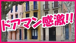 getlinkyoutube.com-外国人の反応】ついお辞儀をしてしまう日本人の行動