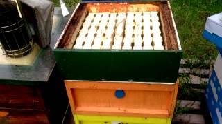 getlinkyoutube.com-Пчеловодство в Англии. Секционный мёд 4.