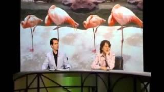 getlinkyoutube.com-Qi - Why Do Flamingos Stand on one Leg?