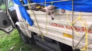 getlinkyoutube.com-Kerala dog killing - dogs being taken in a truck