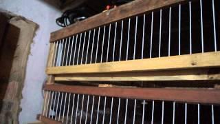 getlinkyoutube.com-viveiros de madeira para codornas parte 1
