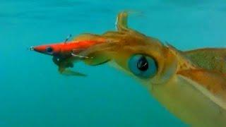 getlinkyoutube.com-AUTO SQUID CALAMARI TROLLING - YouFishTV Australia