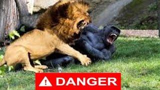 getlinkyoutube.com-Top 10 Animal Fight  يجب مشاهدته
