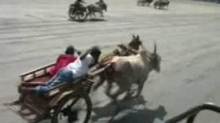 getlinkyoutube.com-gorai horse bull race avlon zico 4