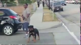 getlinkyoutube.com-كلب يهاجم الشرطة لأنقاذ صحابه شاهد ماذا حدث