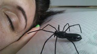 getlinkyoutube.com-Como hacer una araña para bromas pesadas o prank
