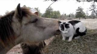 getlinkyoutube.com-Pony grooms cat by www.worthashotfarm.com