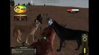getlinkyoutube.com-WolfQuest ~Multiplayer~ Randomness & Hunting Bull Elk