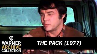 getlinkyoutube.com-The Pack (Preview Clip)