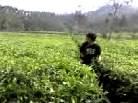 on the spot 7 tragedi kebun teh ciwidey