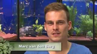 getlinkyoutube.com-Animalisch Nr. 21 @ Ein 11`000 Liter Aquarium selber gebaut mit Marc van den Berg