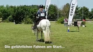 23.06.2018 - Working Equitation Aesch 2018