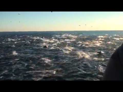 Morski spektakl