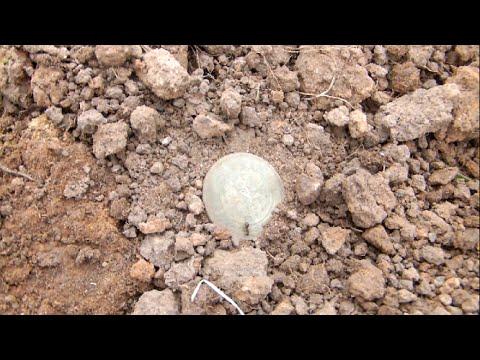 Клад монет с монетного пригорка