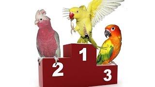 getlinkyoutube.com-Ranking najlepiej gadających papug