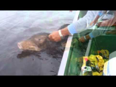 Pescando Porco do Mato ( Queixada ) - Turma do Tucuna 2010