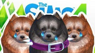 KOIRAT TEKEE KUOLEMAA!   Pelataan Sims 4: Kissat ja Koirat #16
