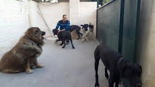 getlinkyoutube.com-قطيع الكلاب مع اضخم كلب ----جاك---- للتعارف خطير مع جمال العمواسي